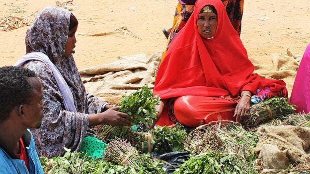 Puntland lifts ban on Khat amid growing COVID 19 cases